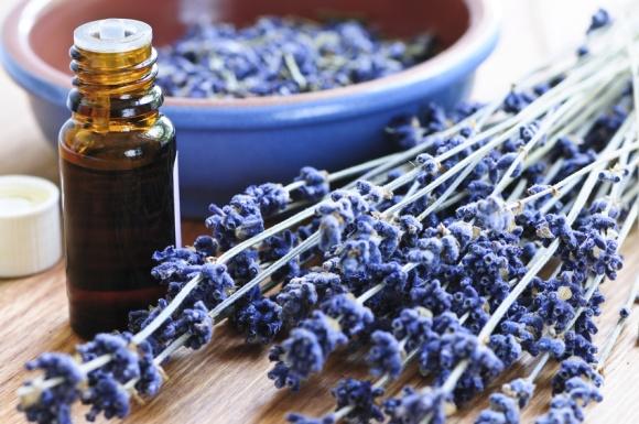 Lavendar oil and flowers.jpg